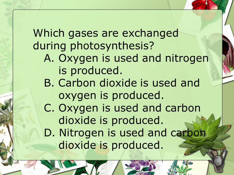 Which gases are exchanged during photosynthesis