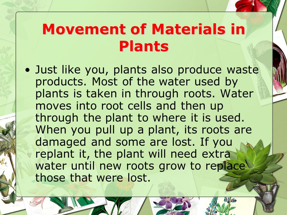 Movement of Materials in Plants
