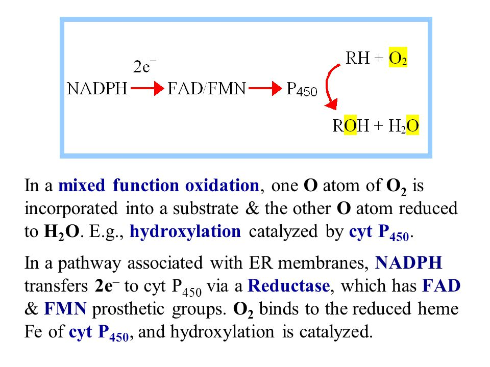 In a mixed function oxidation, one O atom of O2 is incorporated into a substrate & the other O atom reduced to H2O. E.g., hydroxylation catalyzed by cyt P450.