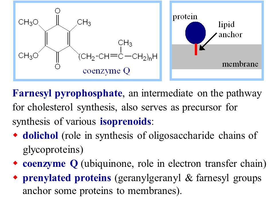 Farnesyl pyrophosphate, an intermediate on the pathway