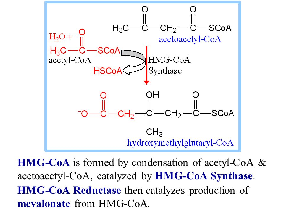 HMG-CoA is formed by condensation of acetyl-CoA & acetoacetyl-CoA, catalyzed by HMG-CoA Synthase.
