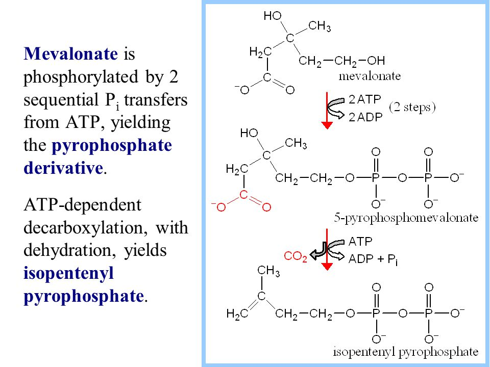 Mevalonate is phosphorylated by 2 sequential Pi transfers from ATP, yielding the pyrophosphate derivative.