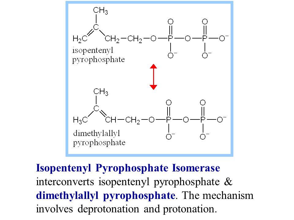 Isopentenyl Pyrophosphate Isomerase interconverts isopentenyl pyrophosphate & dimethylallyl pyrophosphate.