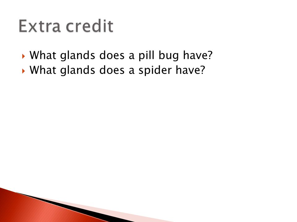 Extra credit What glands does a pill bug have