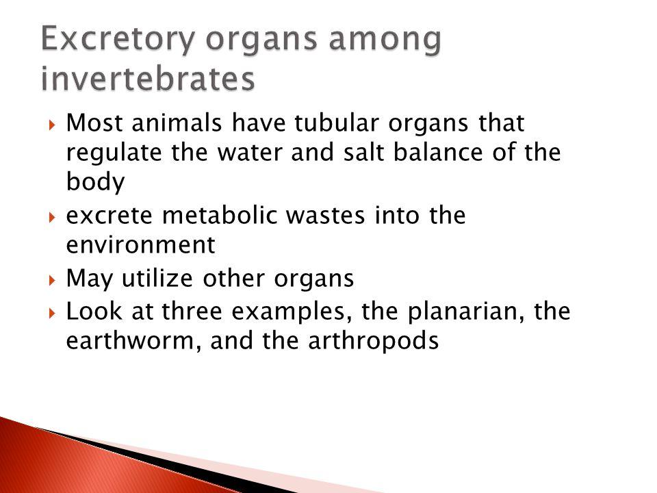 Excretory organs among invertebrates