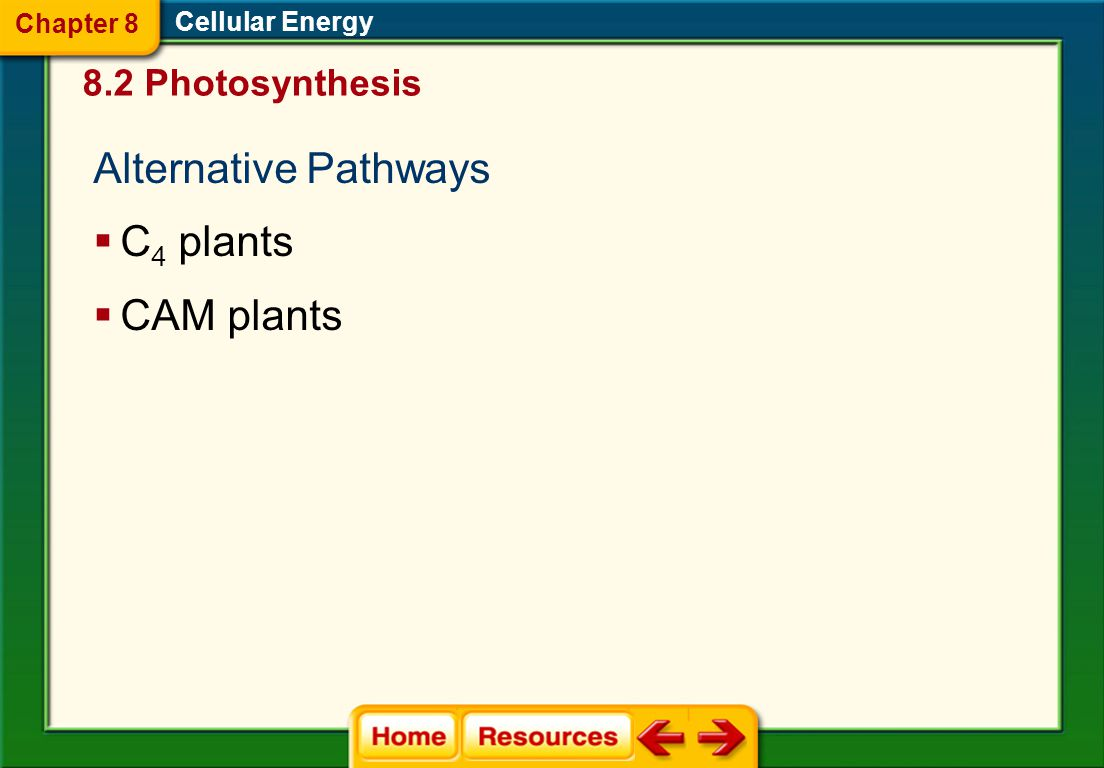 Alternative Pathways C4 plants CAM plants 8.2 Photosynthesis Chapter 8