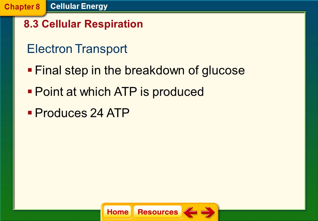Final step in the breakdown of glucose