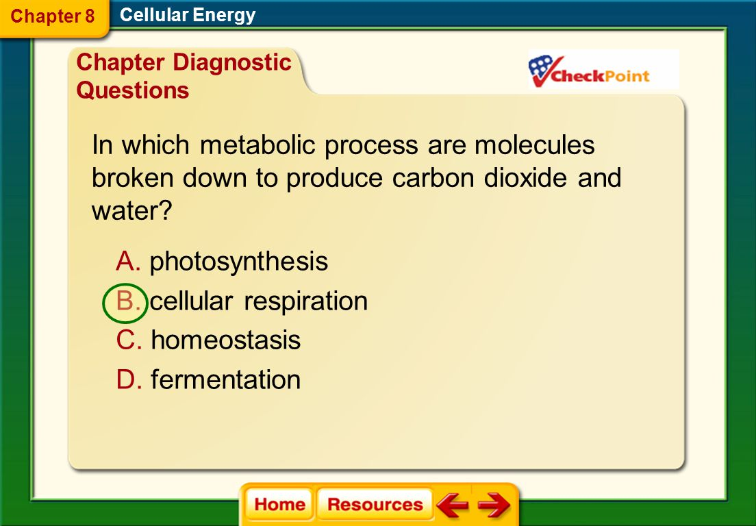 In which metabolic process are molecules