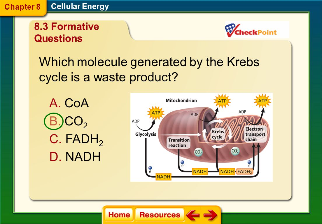 Which molecule generated by the Krebs cycle is a waste product