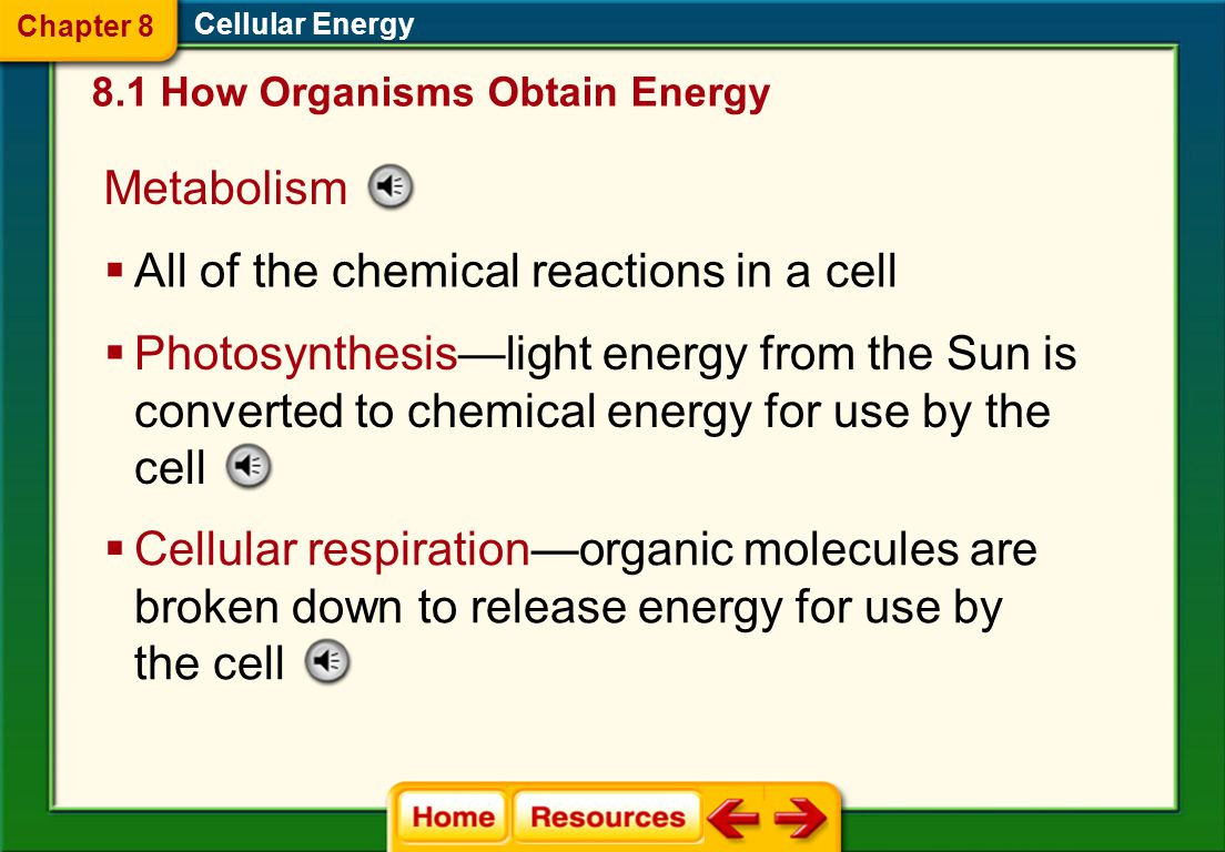 All of the chemical reactions in a cell
