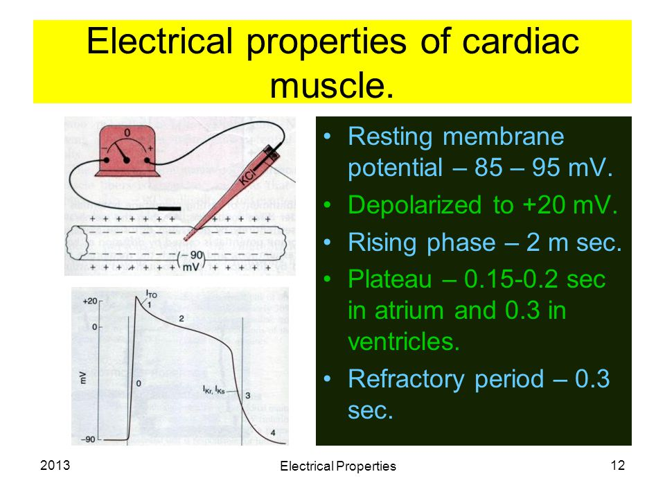 Electrical properties of cardiac muscle.
