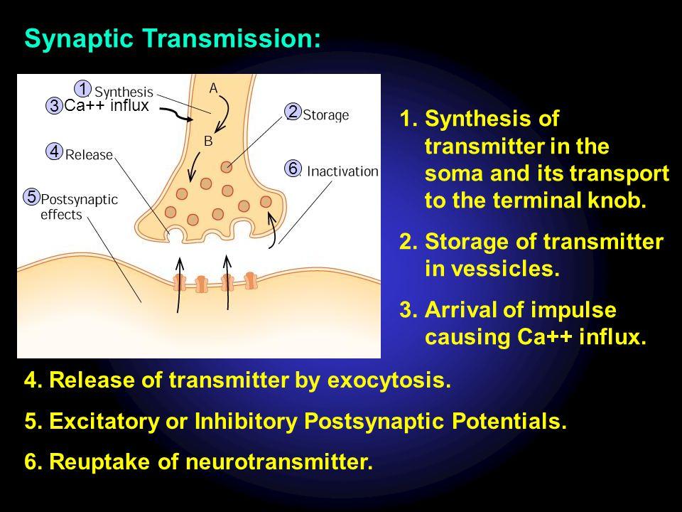 Synaptic Transmission: