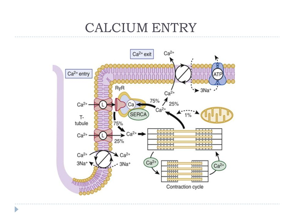 CALCIUM ENTRY