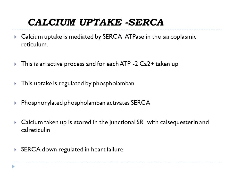 CALCIUM UPTAKE -SERCA Calcium uptake is mediated by SERCA ATPase in the sarcoplasmic reticulum.