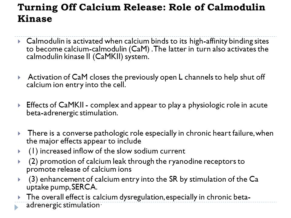 Turning Off Calcium Release: Role of Calmodulin Kinase