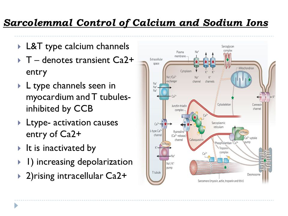 Sarcolemmal Control of Calcium and Sodium Ions