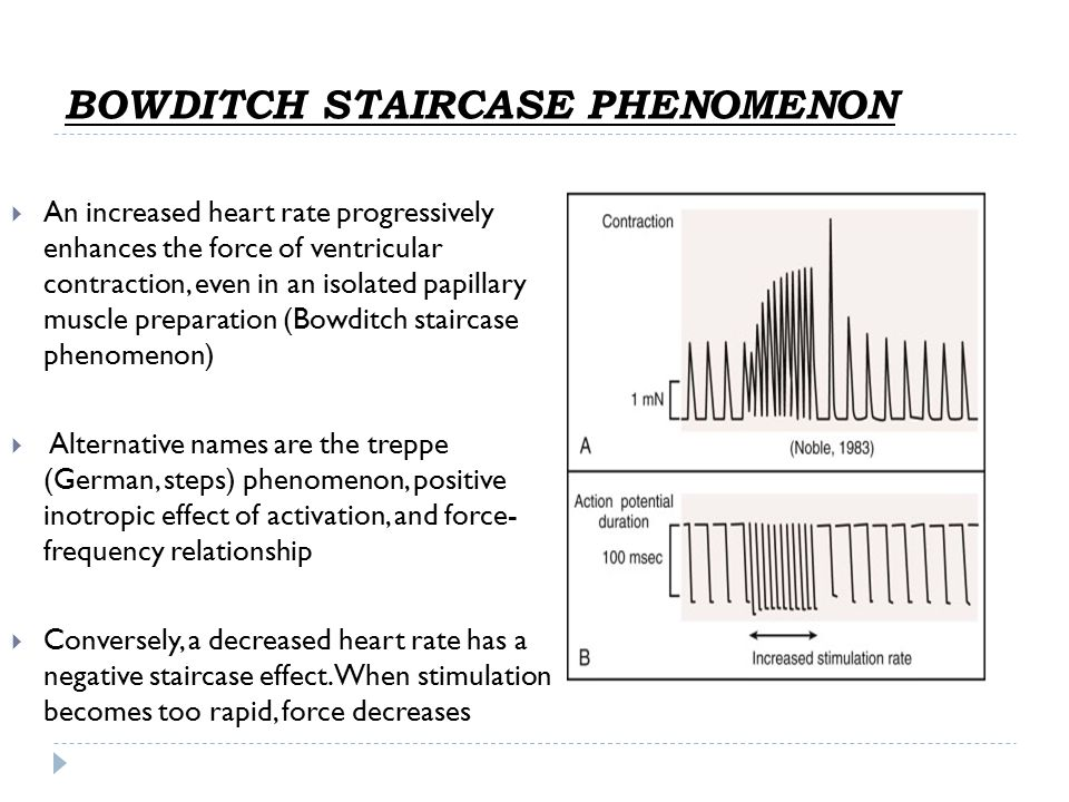 BOWDITCH STAIRCASE PHENOMENON