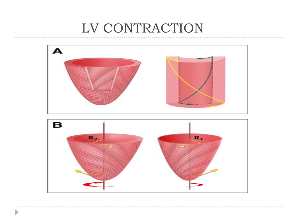 LV CONTRACTION