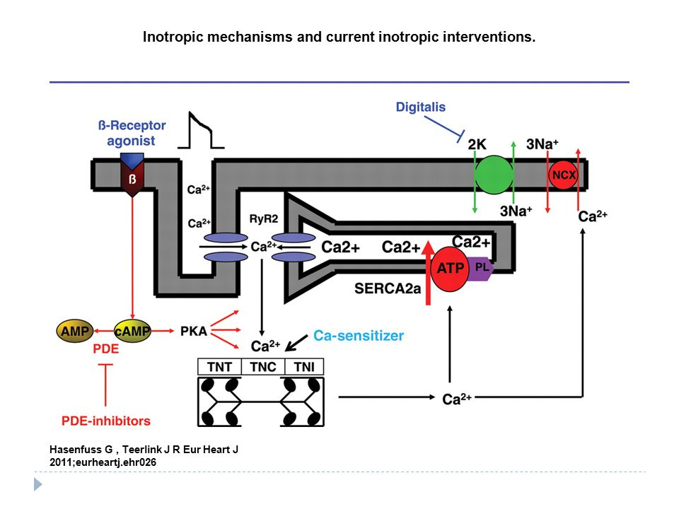 Inotropic mechanisms and current inotropic interventions.