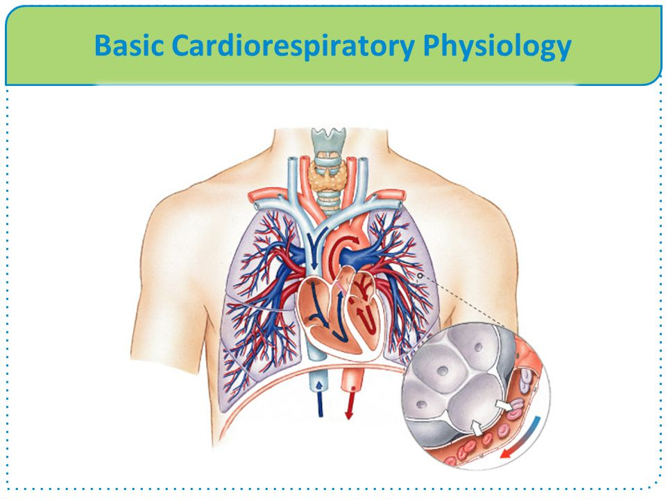 Basic Cardiorespiratory Physiology