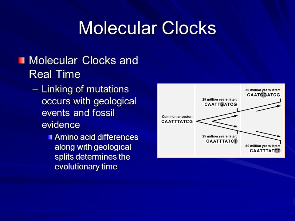 Molecular Clocks Molecular Clocks and Real Time