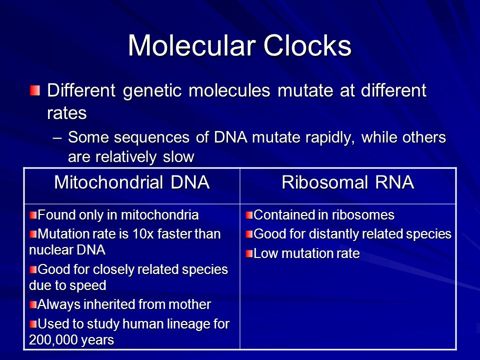 Molecular Clocks Different genetic molecules mutate at different rates