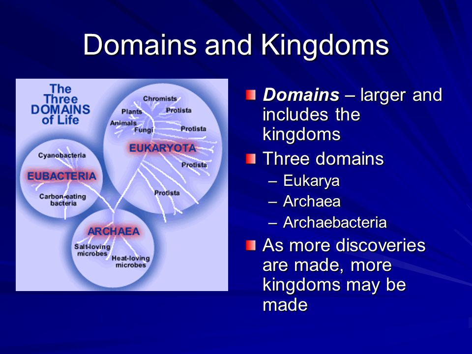 Domains and Kingdoms Domains – larger and includes the kingdoms