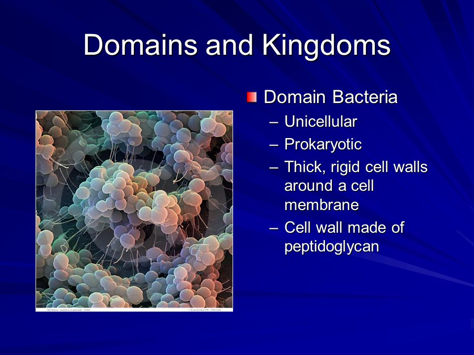 Domains and Kingdoms Domain Bacteria Unicellular Prokaryotic