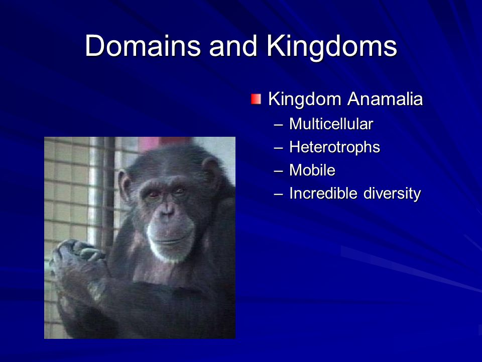 Domains and Kingdoms Kingdom Anamalia Multicellular Heterotrophs