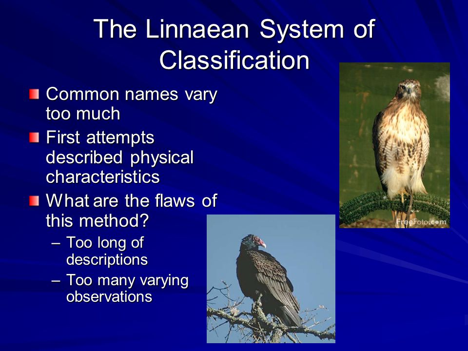The Linnaean System of Classification
