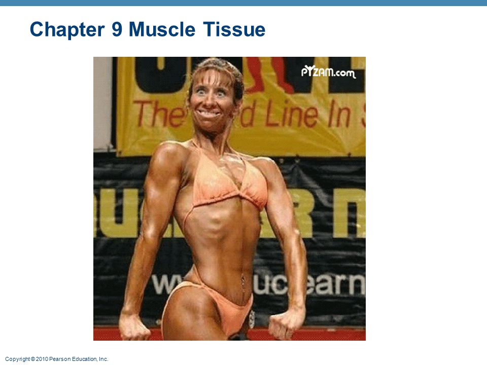 Chapter 9 Muscle Tissue