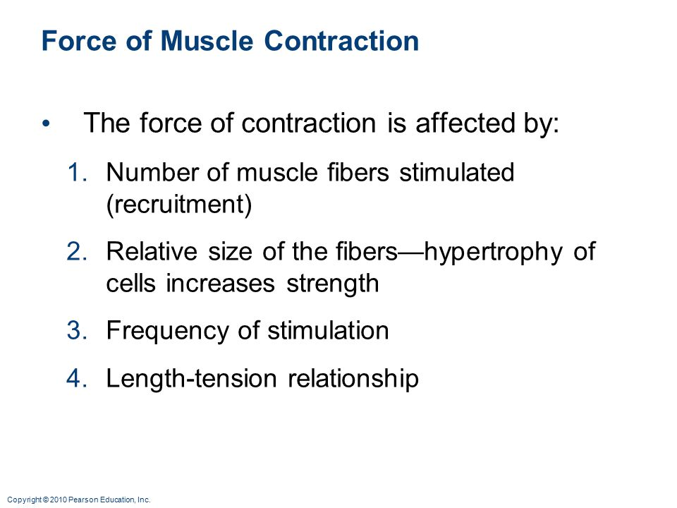 Force of Muscle Contraction