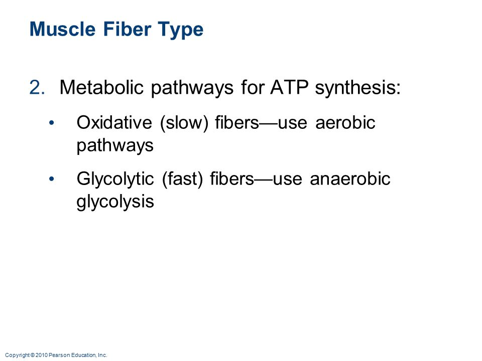 Metabolic pathways for ATP synthesis: