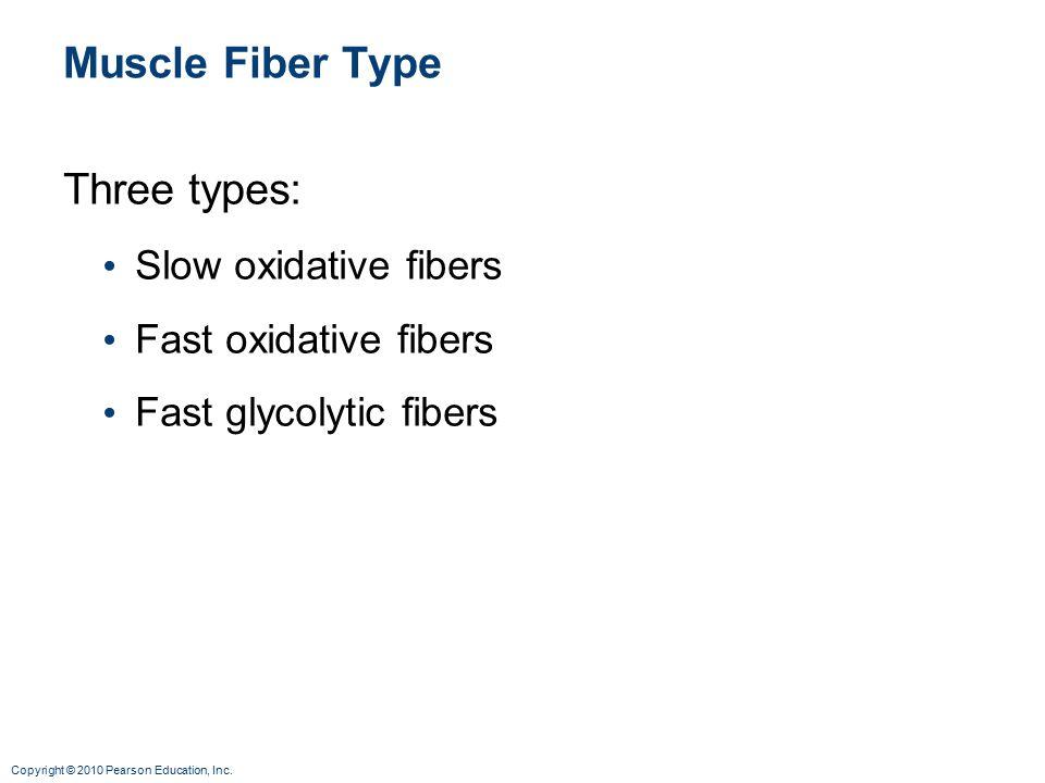 Muscle Fiber Type Three types: Slow oxidative fibers