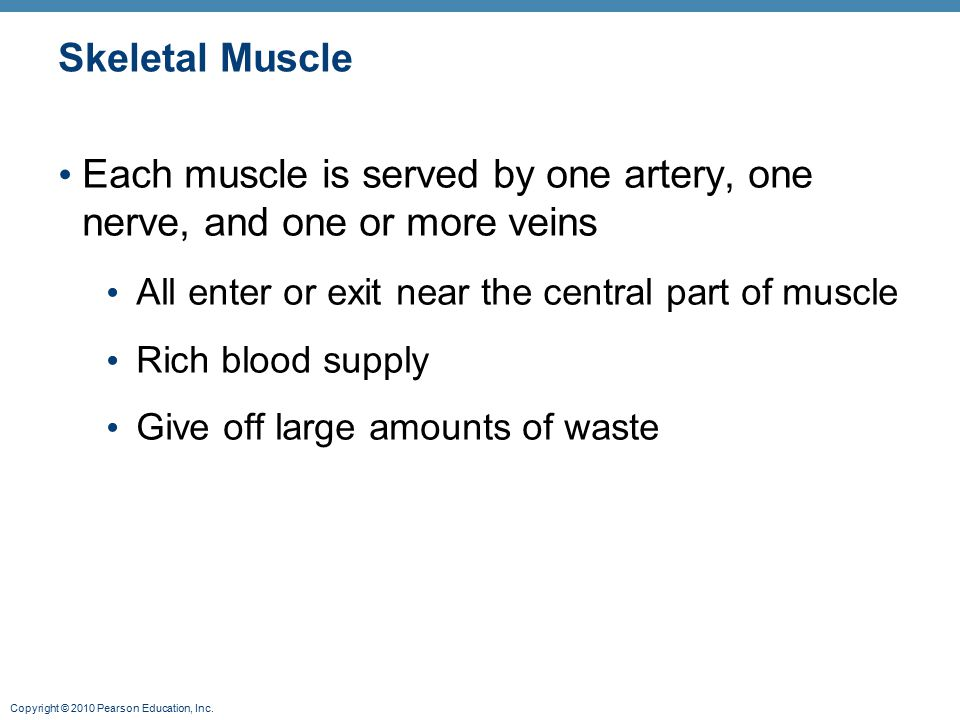 Each muscle is served by one artery, one nerve, and one or more veins
