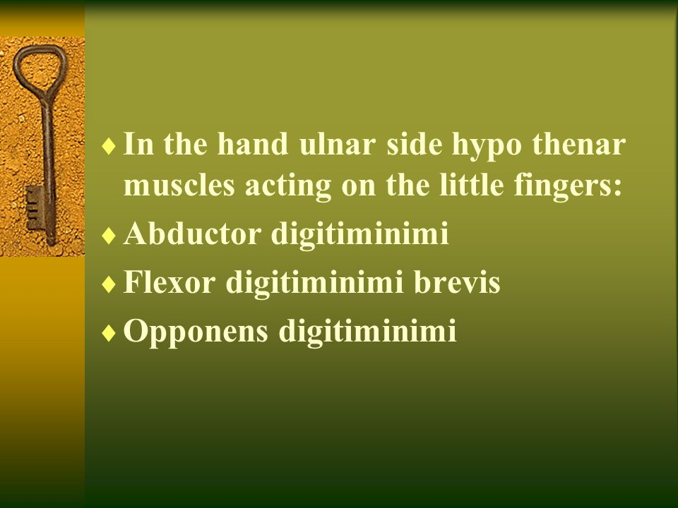 In the hand ulnar side hypo thenar muscles acting on the little fingers: