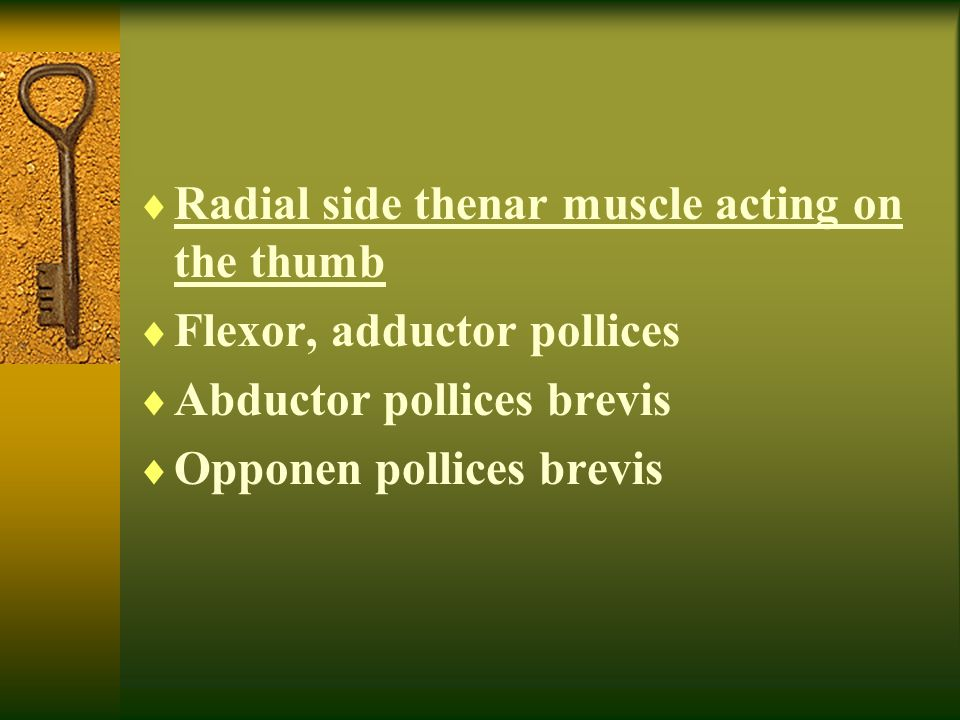 Radial side thenar muscle acting on the thumb