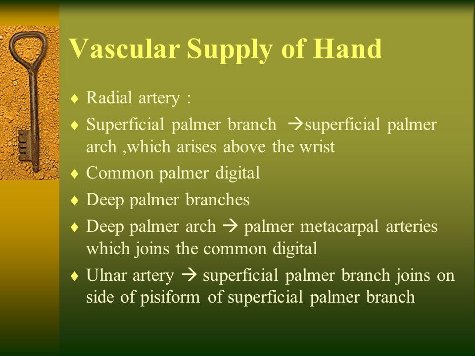 Vascular Supply of Hand