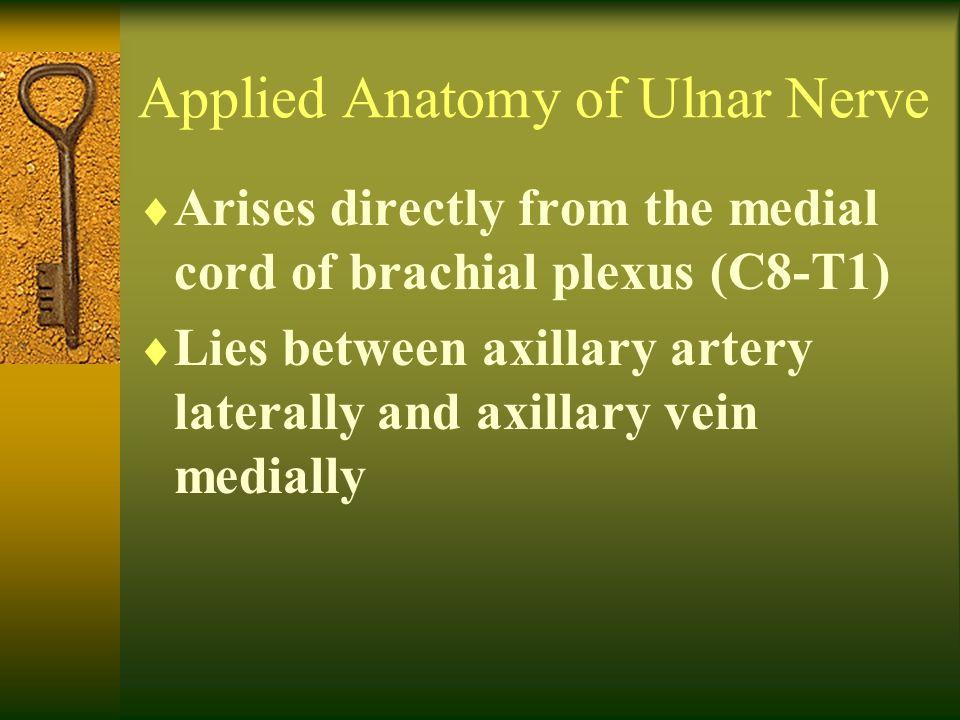 Applied Anatomy of Ulnar Nerve