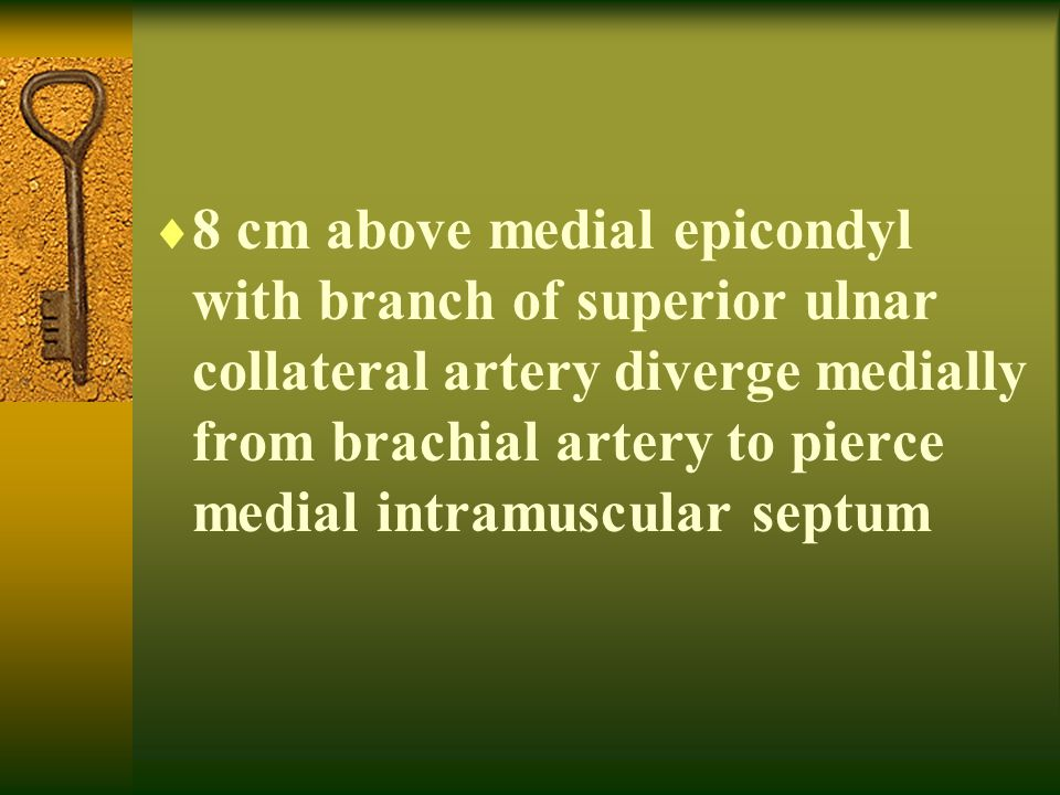 8 cm above medial epicondyl with branch of superior ulnar collateral artery diverge medially from brachial artery to pierce medial intramuscular septum
