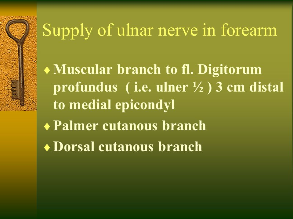 Supply of ulnar nerve in forearm