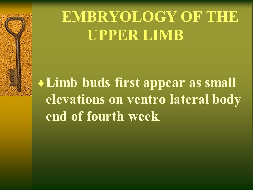 EMBRYOLOGY OF THE UPPER LIMB