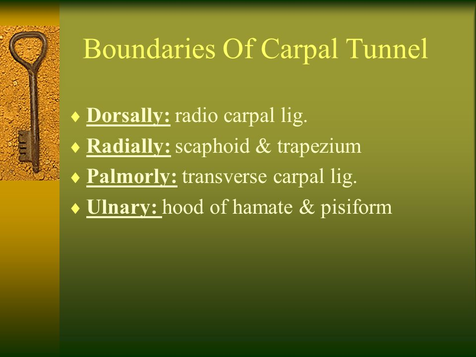 Boundaries Of Carpal Tunnel