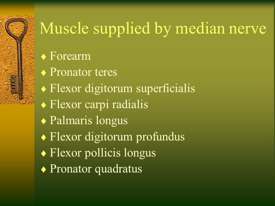 Muscle supplied by median nerve