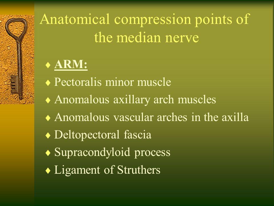 Anatomical compression points of the median nerve