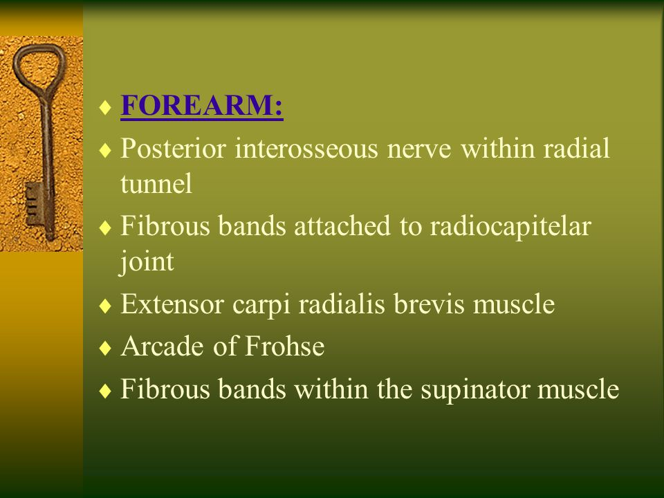 FOREARM: Posterior interosseous nerve within radial tunnel. Fibrous bands attached to radiocapitelar joint.