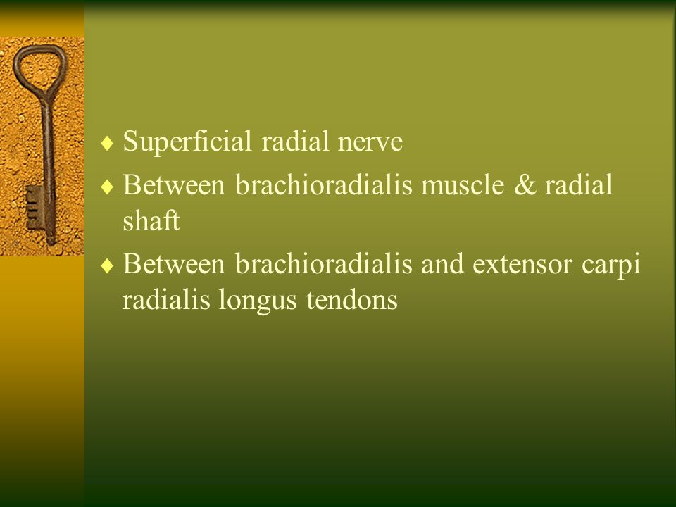 Superficial radial nerve