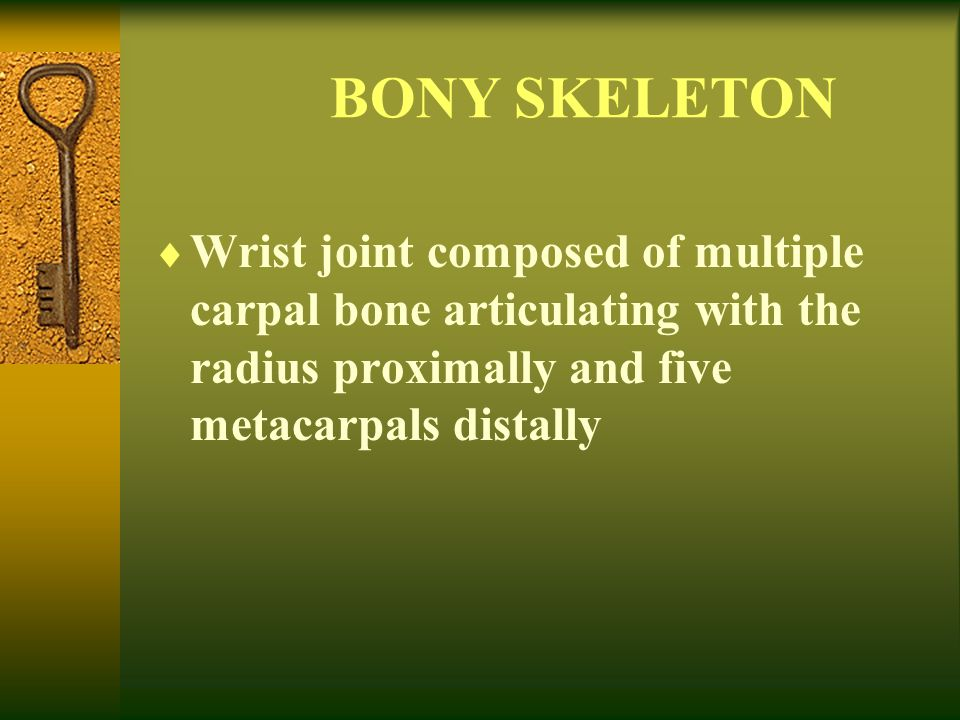 BONY SKELETON Wrist joint composed of multiple carpal bone articulating with the radius proximally and five metacarpals distally.