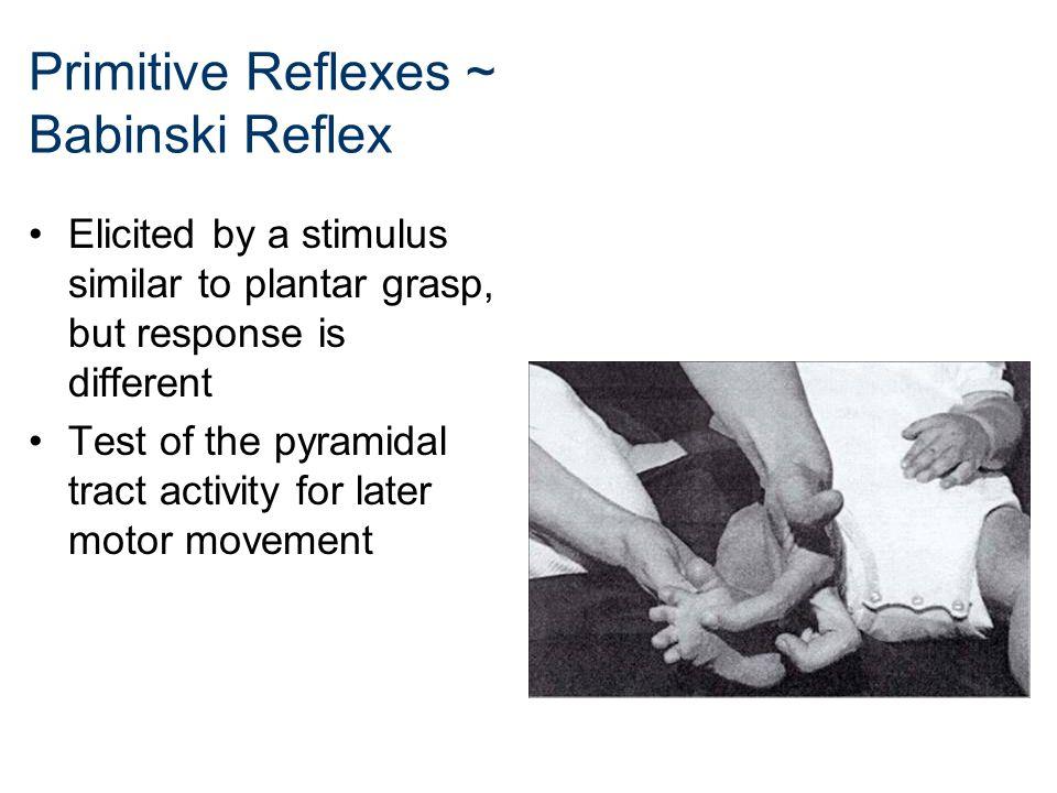 Primitive Reflexes ~ Babinski Reflex