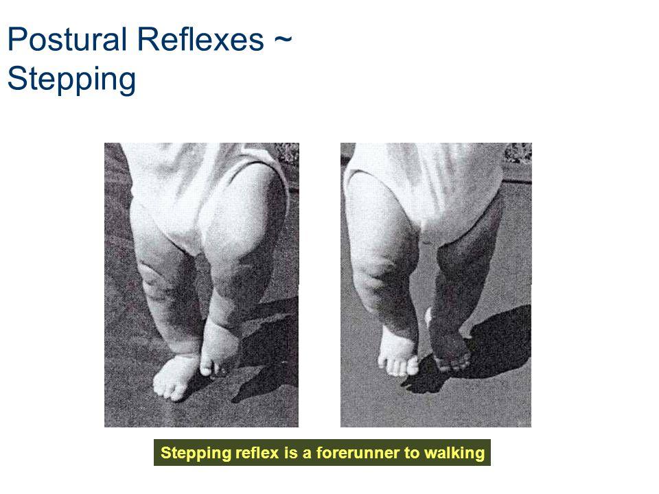 Postural Reflexes ~ Stepping